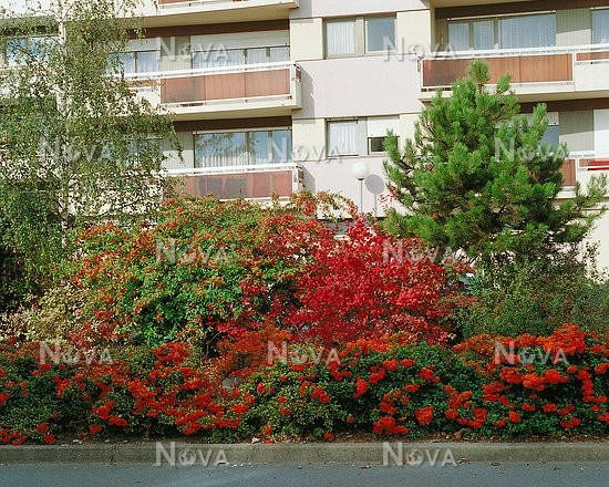 mix hedge in autumn hecke im herbst mediendatenbank. Black Bedroom Furniture Sets. Home Design Ideas