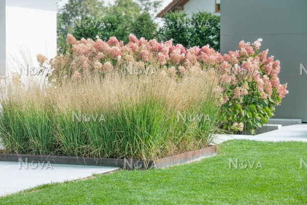 Modern Garden Design With Ornamental Grasses Media Database