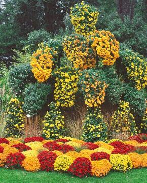 arrangement, Autumn, Chrysanthemum (Genus), Chrysanthemum x grandiflorum, decoration «Miscellaneous», Park, Perennials