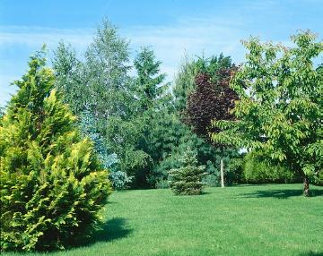 Coniferes, conifers garden, Mixture (Mix), Shrubs and Palms