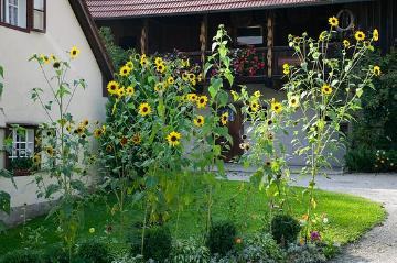 atmosphere, Bauerngarten, Common Sunflower