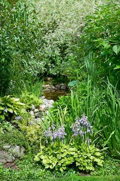 Biotope, Ferns, Perennial garden, plantain lily (Genus), View in the garden, Wasser