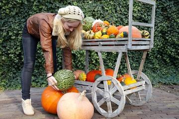 Autumn, girl, gourd (Genus), hand barrow