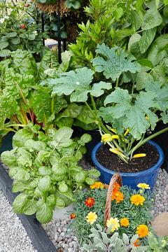 Blacony vegetables, Courgette, Gemüse im Topf, Gesunde Ernährung, Laurus nobilis, Mixture (Mix), Nasturtium officinale, Red Currant, Salvia officinalis, strawberry (Genus), Swiss Chard, Tagetes patula