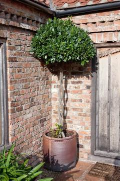 House entrance, Laurus nobilis, long stemmed, Plant container «Accessories in the Garden»