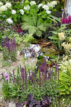 atmosphere, Biotope, blazing star (Genus), Ferns, Japanese Water Iris, Perennial garden, sage (Genus), Summer Impression, Wasserpflanze