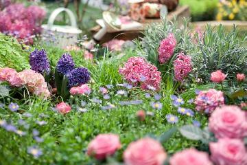 atmosphere, decoration «Miscellaneous», Decoration, Gießkanne, hyacinth (Genus), Hyacinthus, hydrangea (Genus), plant bed, rose (Genus)