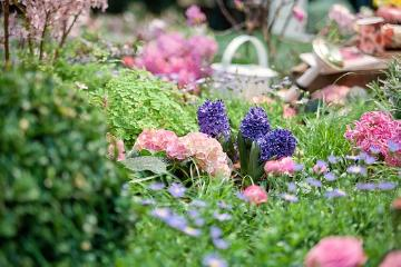 atmosphere, Buxus (Genus), decoration «Miscellaneous», Decoration, Gießkanne, hyacinth (Genus), Hyacinthus, impression, maidenhair fern (Genus), plant bed, rose (Genus)
