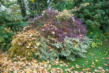 Autumn, fall foliage, Japanese Barberry, Shrubs and Palms, Weigela praecox