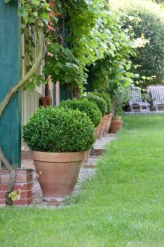 Buxus (Genus), Hauswand, plant container «Gefäße», topiary pruning, vine