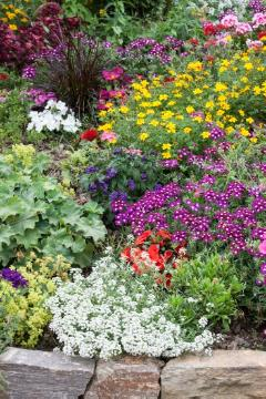 annuals «annuals», beggarticks (Genus), Einjährige Pflanzen Mischung, garden design, lobularia (Genus), Mixture (Mix), planting, touch-me-not (Genus)