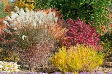 Autumn, Chinese Silver Grass, Euonymus (Genus), fall impression, Mixture (Mix), Ornamental Grass, Shrubs and Palms, sumac (Genus)