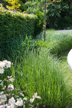 Garden scene, Ornamental Grasses