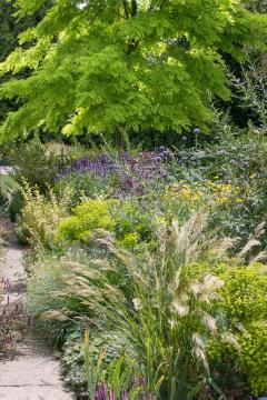 Chamomila, False Acacia (Genus), garden design, Globe thistle (Genus), Ornamental Grasses, Perennial garden, perennials bed, Perennials mix, sage (Genus), spurge (Genus)