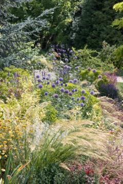 Chamomila, garden design, Globe thistle (Genus), Ornamental Grasses, Perennial garden, perennials bed, Perennials mix, sage (Genus), spurge (Genus)