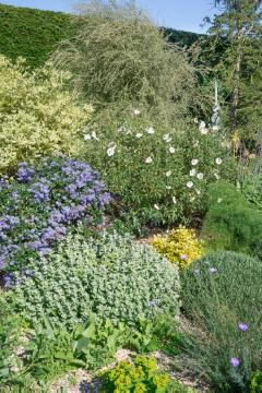 ceanothus (Genus), Common Gum Cistus, garden design, Mixture (Mix), planting, Rock Rose (Genus), Shrubs and Palms