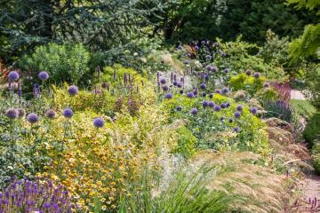Chamomila, garden design, Globe thistle (Genus), Ornamental Grasses, perennials bed, sage (Genus), spurge (Genus)