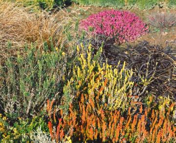 Erica carnea, Heather garden, Leatherleaf Sedge, Mixture (Mix), Ophiopogon planiscapus, sedge (Genus)