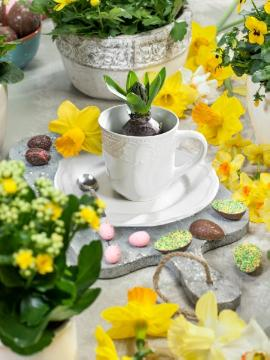atmosphere, daffodil (Genus), Easter decoration, Easter, Ostertisch, Stimmungsbild mit Narcissus, widow's-thrill (Genus)