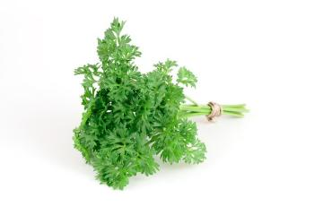 Kochen mit Kräutern, Parsley, Spice plant, Trend und Stil, white background