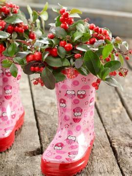 atmosphere, decoration «Miscellaneous», Gaultheria procumbens, Plants for Acid Soil, rubber boots, snowberry (Genus)