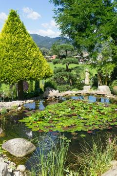 Juniperus (Genus), pond, topiary pruning, waterlily (Genus)