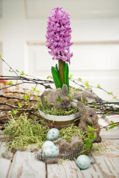 Easter bunny, Easter eggs, Easter, Hyacinthus orientalis, Quail eggs