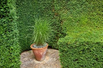 Chinese Silver Grass, Formaler Garten, Taxus baccata, topiary pruning, topiary