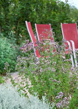 Garden Furniture, Origanum vulgare