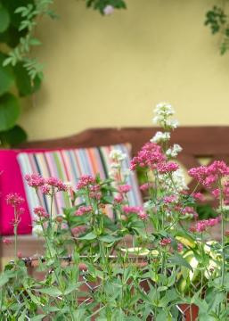 atmosphere, Centranthus ruber, Garden Bench, impression