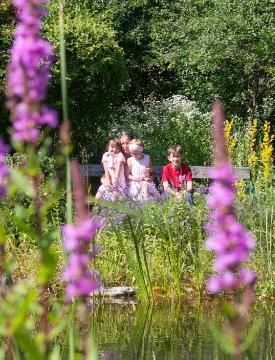 children, Lythrum (Genus), People, pond, Summertime