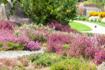 Calluna vulgaris, Gehweg, heath (Genus), Plants for Acid Soil