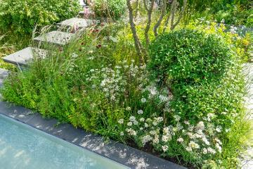 Knautia macedonica, Orlaya grandiflora, Ragged Robin, spurge (Genus), Swimming pool, terrace, Terrassengarten