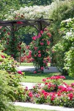 atmosphere, Lebensraum Garten, Mixture (Mix), rambler, rose (Genus), Rose garden, View in the garden