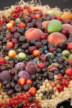 blueberry (Genus), Cherry, Fruit / Fruit Trees, Gesunde Ernährung, Gooseberry, Obstschale, Peach, Red Currant