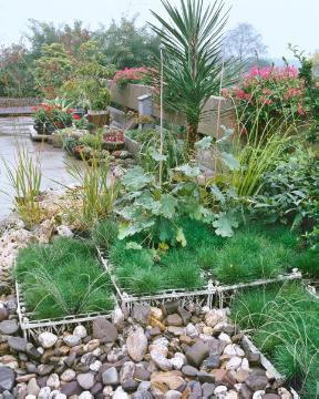 Mixture (Mix), Ornamental Grasses, Plant container «Accessories in the Garden», Succulent, Urban Garden, yucca (Genus)