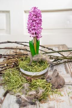 Easter bunny, Easter, Hyacinthus orientalis
