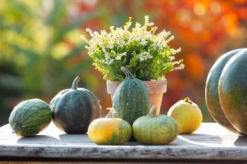 Autumn, Brassica oleracea var. acephala, Calluna vulgaris, Fall plants, Herbstdekoration, herbstlich, Vegetable Pumpkin