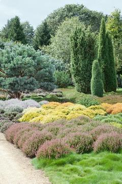 conifers garden, heather (Genus), Heather garden, Juniperus (Genus), Pinus (Genus), Säulenwuchs