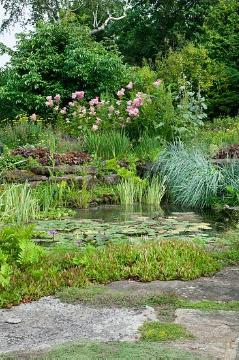 Biotope, Gewässer, Ornamental Grasses, Perennials, Shrubs and Palms, Wasser, Wasserpflanze