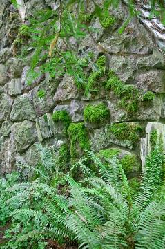 atmosphere, Ferns, Natural stone wall, Naturstein, shade plants, stone wall