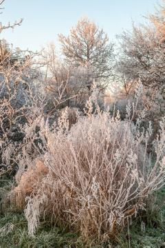 glazed frost, Mixture (Mix), Shrubs and Palms, Winter impression, Winter