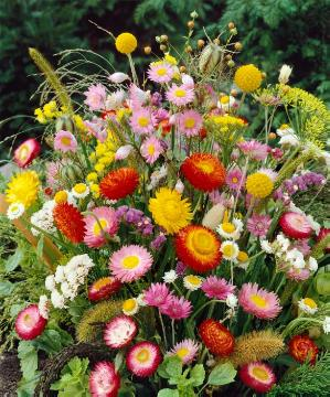arrangement, flower arrangement, Helichrysum (Genus)