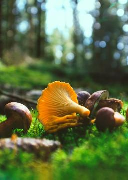 Autumn, detail, impression, Mushrooms, Wald