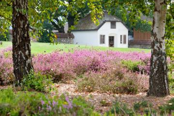 Calluna vulgaris, Haus, heath (Genus), Plants for Acid Soil