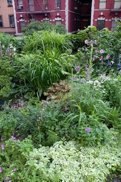 Ornamental Grasses, Perennial garden, Perennials «perennials», Shrubs and Palms, Urban Garden