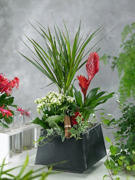 decoration «Miscellaneous», Indoor Plants, widow's-thrill (Genus), yucca (Genus)