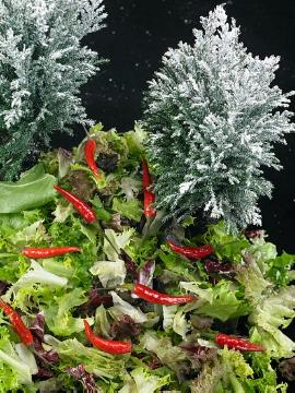 Christmas decoration, Cupressus macrocarpa, decoration «Miscellaneous», Vegetable, vegetables mix