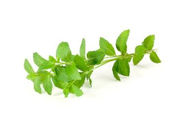 Peppermint, white background