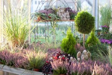 Autumn, Chamaecyparis (Genus), Fall plants, garden center, heath (Genus), heather (Genus), Mixture (Mix), silvergrass (Genus), Skulpturen, woodsorrel (Genus)